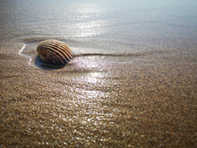 Close Up On A Shell On The Beach With Incoming Tide And Soft Natural Sunlight - Vacation Concept