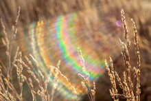 Magical Fabulous Bright Sunlight From Rising Sun Passes Through Ears Of Field Dry Wild Plants And Shimmers With Colorful Colors Of Rainbow. Beautiful Autumn Background. Shooting On Warm Day At Sunrise