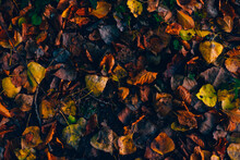 High Angle View Of Dried Leaves On Field