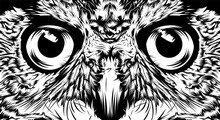 Face Owl Illustration Sketch Portrait Closeup Design Vector Black White