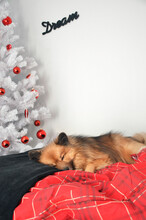 Dog Sleeping In Front Of A White Christmas Tree