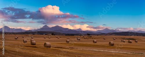 Fototapeta Panoramic View of Bales of Hay in a farm field. Dramatic Sunset Summer Sky. Taken near Pincher Creek, Alberta, Canada. obraz