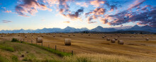 Panoramic View Of Bales Of Hay In A Farm Field. Dramatic Sunrise Summer Sky. Taken Near Pincher Creek, Alberta, Canada.