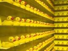 Full Frame Shot Of Rubber Ducks In Shelves