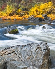 Autumn Colors Line The Bank As The Trinity River Rushes Past Large Boulders.