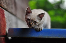 Close-up Portrait Of Kitten By Outdoors