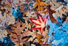 High Angle View Of Autumn Leaves