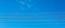 Ten Swallows Sitting On A Wire Against Blue Sky Background. Birds Are Like Notes On The Staff. Summertime. Power Supply System. Nature And Technogenic Progress Of Humanity