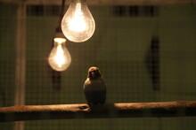 Close-up Of Bird Perching On Illuminated Light