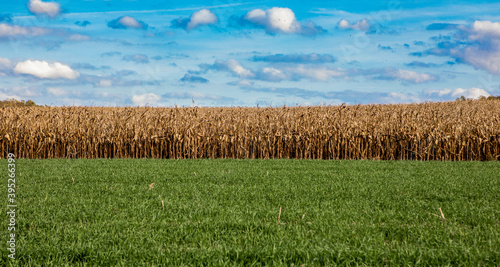 Fotografering Pennsylvania rural farm with crops during fall