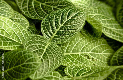 Green structured leaves Wallpaper Mural