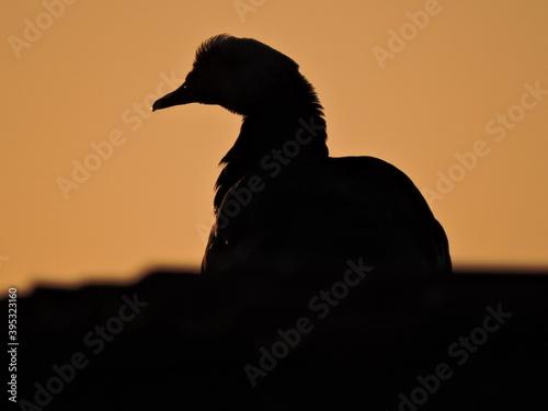 Fototapeta premium duck and sun