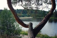 Pine Fork