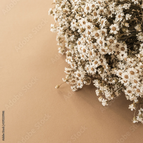 Beautiful small chamomile daisy flowers bouquet on pastel beige peachy background. Valentine's Day, Mother's Day holidays celebration composition.