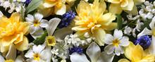 Background With Garden Daffodi...