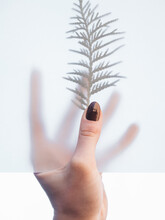 Hand Holding A Transparent Paper And A Branch