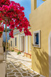 Picturesque alley in lefkes Paros greek island with a full blooming bougainvillea and traditional houses.