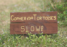 Gopher Tortoise Warning Sign In The Forest