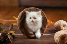 Kitten In A Wicker Basket Play...