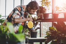 Senior Asian Man Is Watering Houseplant In His Home Gardening Small Business Plant Workshop.