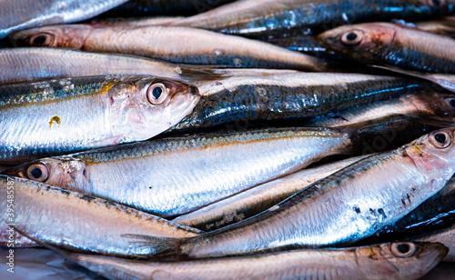 Fotografija sardines in a row, photo full of fresh sardines caught in the sea