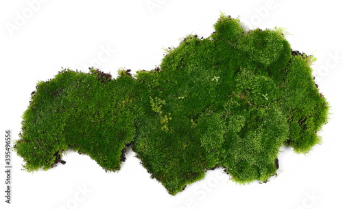 Fotografía Fresh green moss isolated on white background and texture, top view
