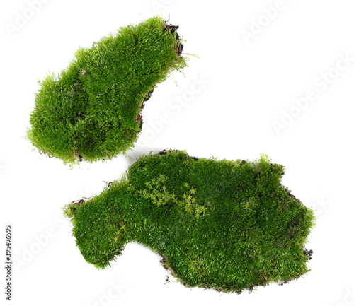 Fresh green moss isolated on white background and texture, top view