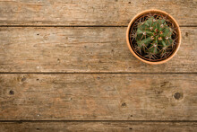 Rustic Background With Cactus ...