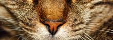 Close Up Portrait Of A Cat Wit...