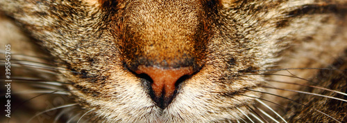 Fotomural close up portrait of a cat with eye, fur nose and whiskers