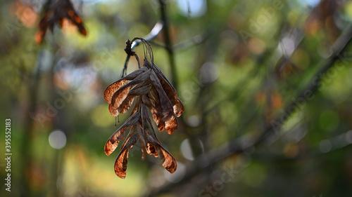 Fototapeta liść, jesień, drzewo, przyroda obraz