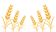 Wheat Pattern Wallpaper. Oat Symbol. Free Space For Text.