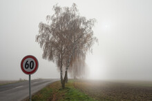 Birch Tress By The Road In The Fog With Speed Limit Sign