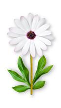 Offbeat Chamomile Flower. Comp...