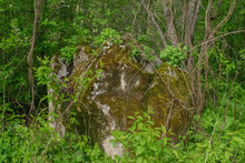A Large Stone Is Overgrown With Moss And Stands In The Forest Under The Trees