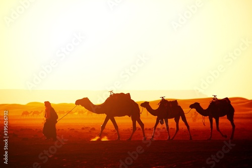 camels in the desert Fotobehang