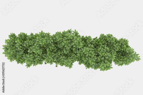 Slika na platnu Decorative park and garden plants isolated on grey background