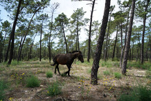 Brown Horse In A Forest
