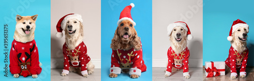 Cute dogs in Christmas sweaters and Santa hats on color backgrounds. Banner design