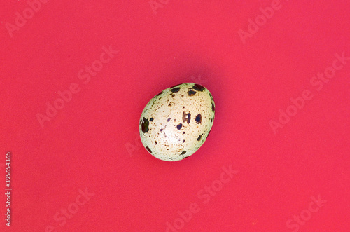 One quail egg on a light red surface, top view, empty place for text Fototapet