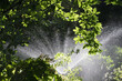 canvas print picture - LEIPZIG, GERMANY - Sep 15, 2019: Watering in the park in summer