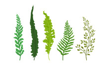 Green Fern Frond Or Branch As ...