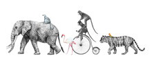 Beautiful Stock Composition Pencil Illustration Of Safari Elephant Tiger Monkey Animals.