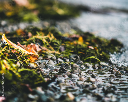 Canvas Macro photograph of the shoreline around Derwent Waters.