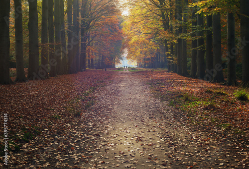 Fototapety, obrazy: Pathway and country house in hazy autumn forest.