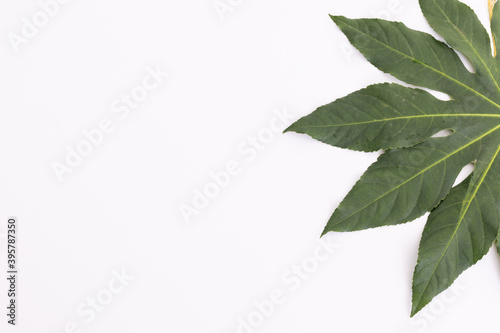 Green leaf lying on right side on white background