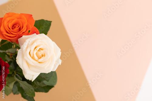 White and orange roses on pink and orange background
