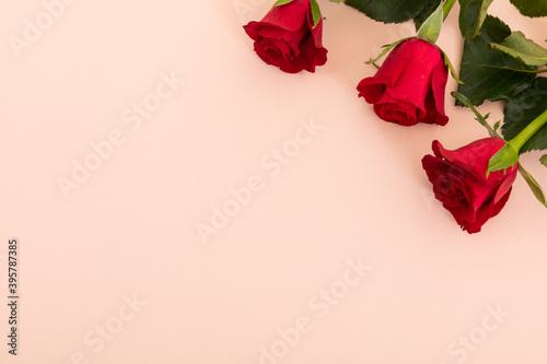 Fototapeta premium Three red roses in top right corner on pink background