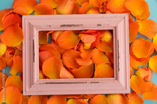 Fototapeta premium Close up of orange rose petals with red rustic frame on blue background
