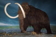Wooly Mammoth At Royal British Columbia Museum